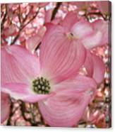 Office Art Prints Pink Flowering Dogwood Tree 1 Giclee Prints Baslee Troutman Canvas Print