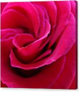 Office Art Rose Spiral Art Pink Roses Flowers Giclee Prints Baslee Troutman Canvas Print