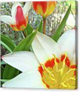 Office Art Tulips Tulip Flowers Giclee Art Prints Florals Baslee Troutman Canvas Print