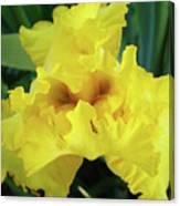 Office Art Yellow Iris Flower Irises Giclee Prints Baslee Troutman Canvas Print