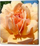Office Artwork Roses Peach Rose Flower Giclee Baslee Troutman Canvas Print