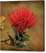 Ohia Lehua Flower Volcanos National Park Canvas Print