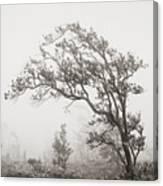 Ohia Lehua Tree Canvas Print