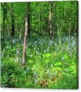 Ohio Wildflowers In Spring Canvas Print