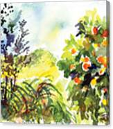 Ojai Oranges Canvas Print