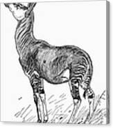 Okapi Canvas Print