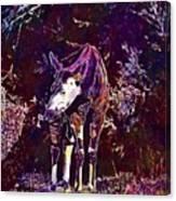 Okapi Okapia Mondonga Mammals  Canvas Print