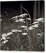 Oklahoma Prairie Flowers Canvas Print