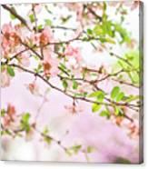 Oklahoma Spring Canvas Print