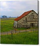 Old Barn In The Mustard Fields Canvas Print