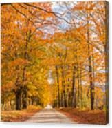 Old Coach Road Autumn Canvas Print
