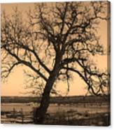 Old Crooked Tree Overlooking Mississippi River Canvas Print