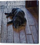 Old Dog Old Floor Canvas Print