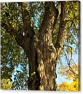 Old Elm Trunk In The Park Canvas Print