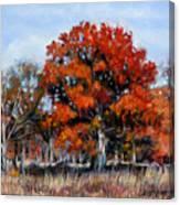 Old Fall Oak Canvas Print