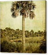 Old Florida Palm Canvas Print