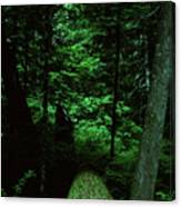 Old Growth Forest At Lost Lake On Mount Hood Canvas Print