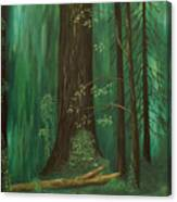 Old Growth Priest Point Park Canvas Print