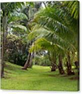 Old Hawaiian Garden Canvas Print