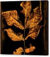 Old Hickory Leaf Canvas Print