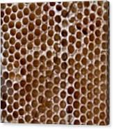 Old Honey Comb Bee Hive  Canvas Print
