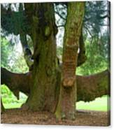Old Huge Tree Canvas Print