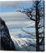 Old Larch Tree Has Best View Canvas Print