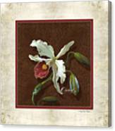 Old Masters Reimagined - Cattleya Orchid Canvas Print
