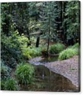 Old Mill Park In Mill Valley 2 Canvas Print