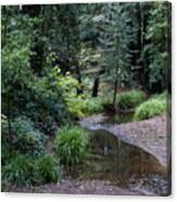 Old Mill Park In Mill Valley Canvas Print