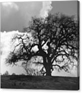 Old Oak Against Cloudy Sky Canvas Print