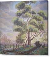 Old Oak Tree Creek Canvas Print