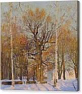 Old Oak-tree In Kolomenskoye Canvas Print