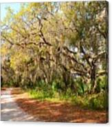 Old Oak Trees And Moss Canvas Print