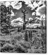 Old Oaks Bw.  Canvas Print