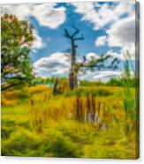 Old Oaks Painterly.  Canvas Print