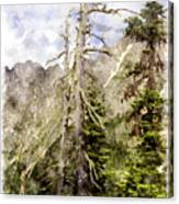 Old Pines Cascades Wc Canvas Print