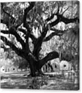 Old Plantation Tree Canvas Print