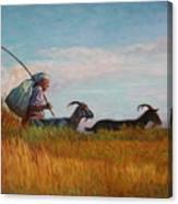 Old Shepherd Canvas Print