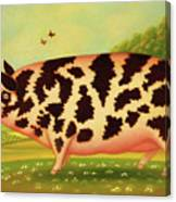 Old Spot Pig Canvas Print