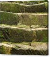 Old Stone Steps Canvas Print