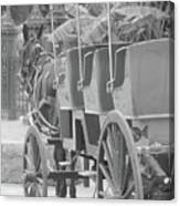 Old Time Horse And Buggy Canvas Print
