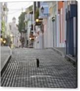 Old Town Alley Cat Canvas Print
