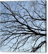 Old Tree Canvas Print