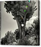 Old Tree In Sicily Canvas Print