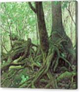 Old Tree Root Canvas Print