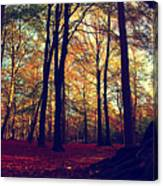Old Tree Silhouette In Fall Woods Canvas Print