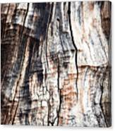 Old Tree Stump Tree Without Bark Canvas Print