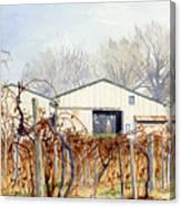 Old Vines Canvas Print