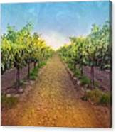 Old #vineyard Photo I Rescued From My Canvas Print